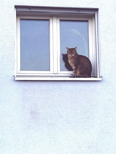 Cat's life!
