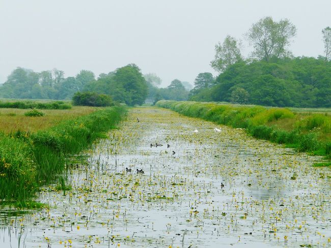 Somerset Levels Uk Natures Diversities Wild Flowers Nature On Your Doorstep Nature Relaxing Taking Photos Yeah Springtime! Water Lilies. Lilly Pads. Animals Landscape