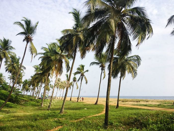 Sea Beautiful Country Beach Monrovia Africa WestAfrica Liberia Monrovia Growth Land Tranquility Nature Green Color Landscape