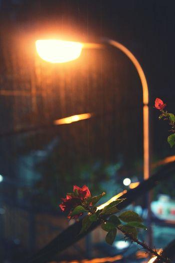 Beautiful Rainyflower Under The light