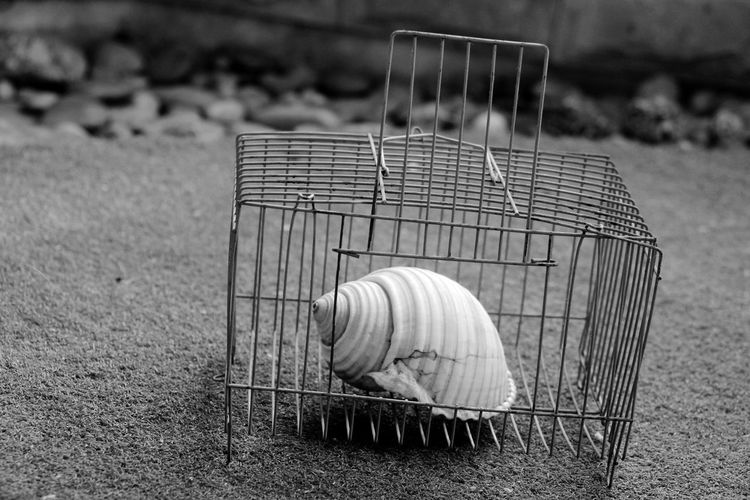 Close-Up Of Shell In Cage