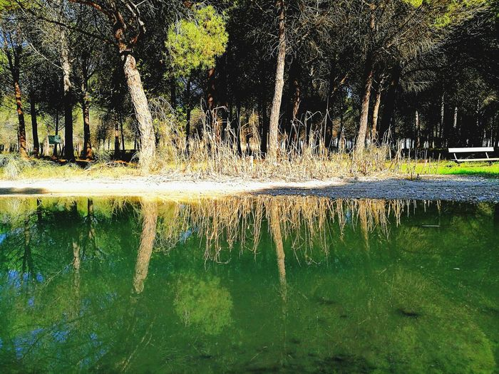 Nature No People Plant Beauty In Nature Tranquil Scene Fragility Reflection Reflections In The Water
