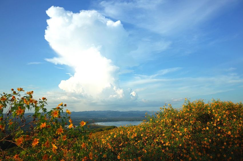 Cloud - Sky Nature Blue Sky Flower Landscape Plant Outdoors Day No People Beauty In Nature Scenics Mountain Water Tree