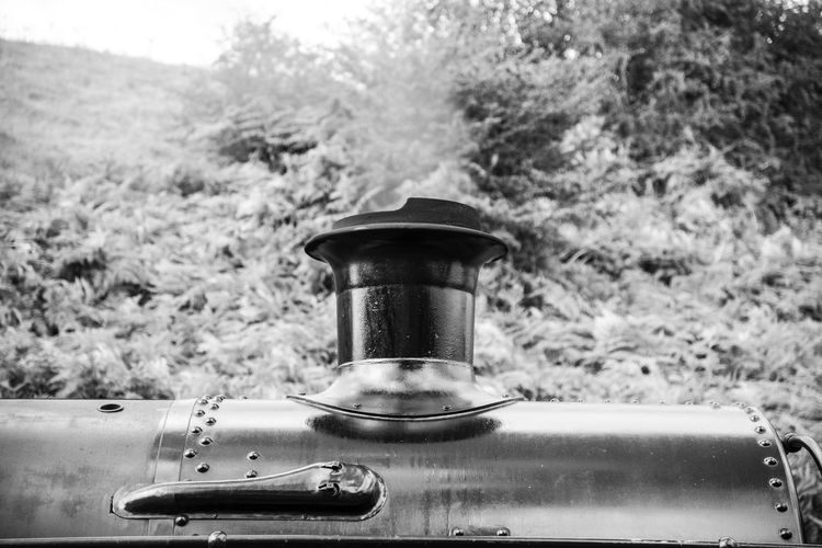 Chimney Choo Choo Close-up Coal Day Food And Drink Freshness No People Outdoors Railway Steam Steam Train Tree