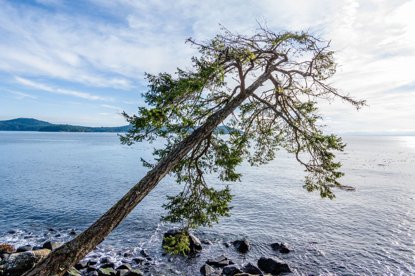 East Sooke Park, Vancouver Island Fir Tree Lone Tree Nature Ocean View Sky And Clouds Beach No People Tranquil Scene Watrongkhun