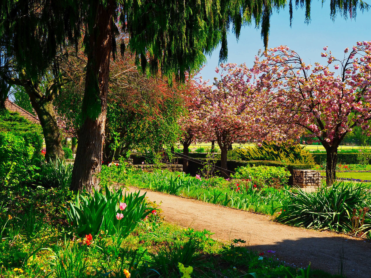 SCENIC VIEW OF FLOWERING PLANTS IN PARK