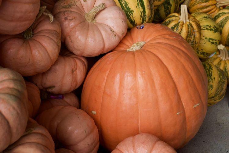 Full frame shot of pumpkins for sale