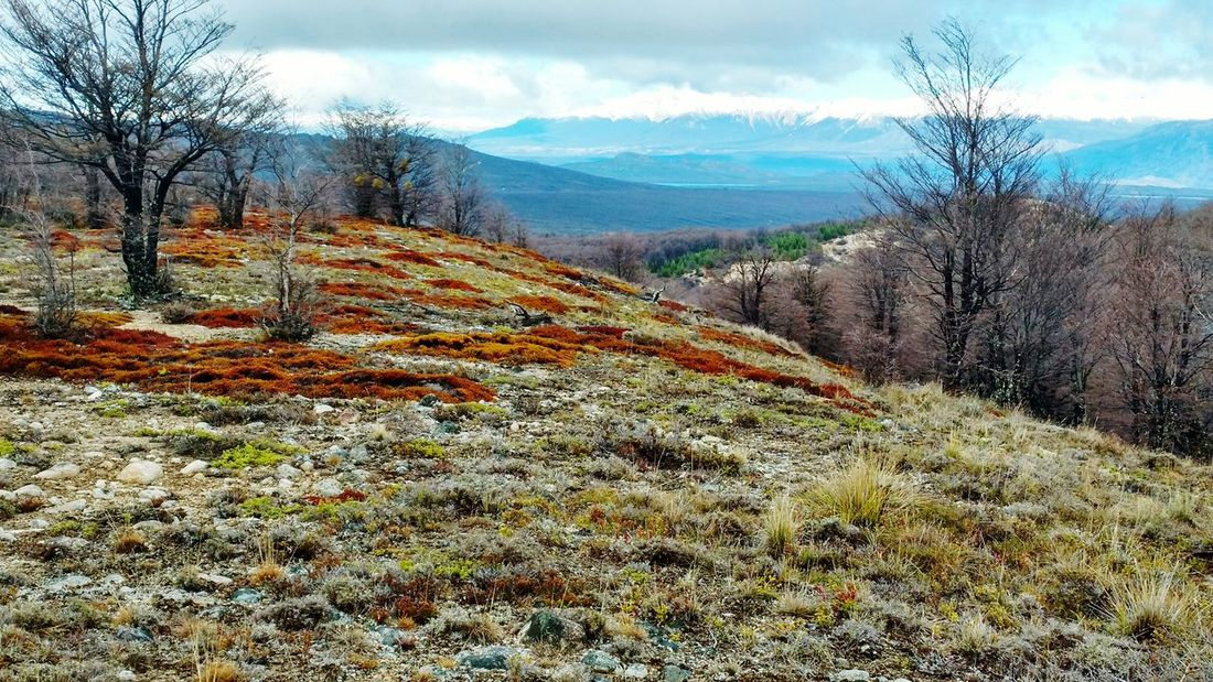 Invierno Winter Colours Of Nature Nature Colours Landscape Chubut Patagonia Patagonia Argentina Forest Bosque Mountains Montanas
