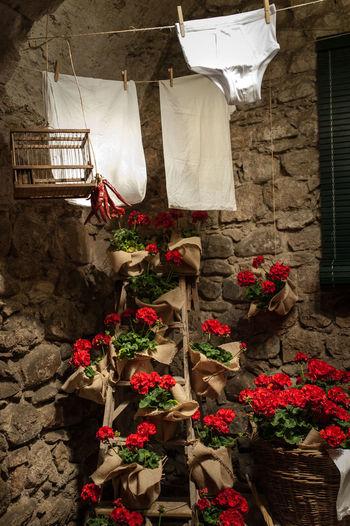 Desde Girona Temps De Flors 2016 esta colada...con suavizante perfumado incluido 😂😂😂 Catalunya Gironamenamora Live White Passion La Colada De Los Viernes