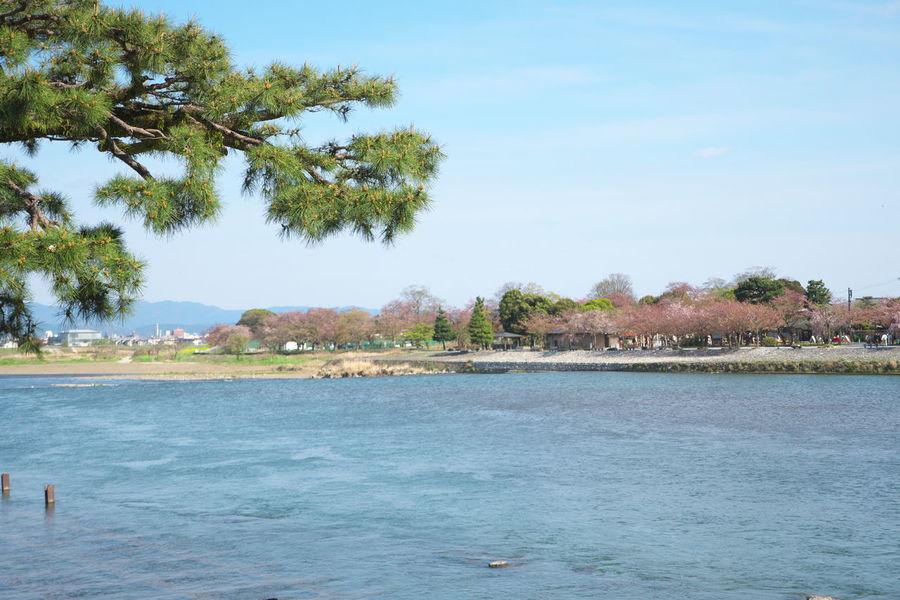 Arashiyama Blue Sky River Sky Togetsukyo Tranquil Tree 渡月橋