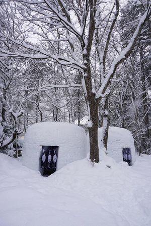 2017 Bare Tree Cold Temperature Hana To Hana Ice Igloo Japan Kamakura Nature Outdoors Snow Snow Igloo Snowing Tochigi Tree White Winter かまくら 栃木 花と華 Yunishigawa