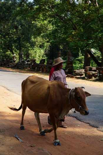 Woman standing by cow walking on footpath