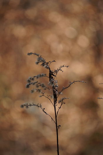 Close-up of dry plant
