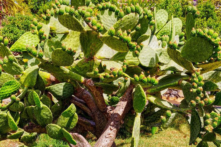 Cacti jungle up