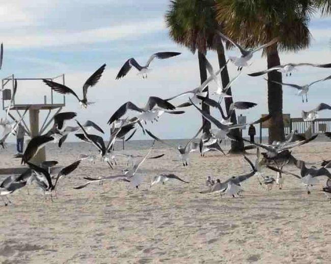 Seagulls on shore