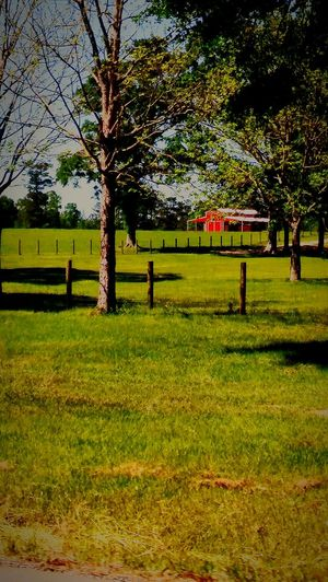 RedBarn_Photography Red Barn Country Side The CountryBogalusa No People Outdoors Color Red Grass Tree Green Color Nature Growth Tranquility Day Landscape EyeEm Nature Lover EyeEm Best Shots Fulllength Eye4photography  Eyeembestshot_landscape The Country Side Of Me :)