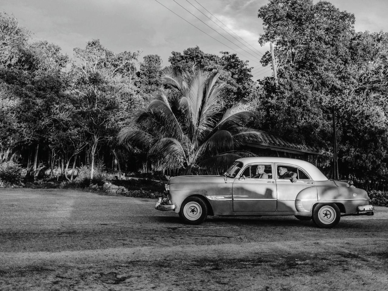 tree, car, growth, palm tree, transportation, nature, outdoors, sky, no people, day