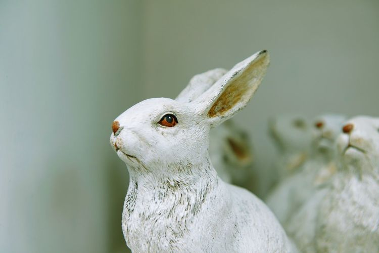 Animal Representation Representation Figurine  Toy Decoration Easter Art And Craft Retail  For Sale Craft Statue Bunny  Rabbit - Animal EyeEm Selects Animal Themes Animal One Animal Vertebrate Close-up No People Focus On Foreground Animal Head  Side View Animal Body Part Indoors