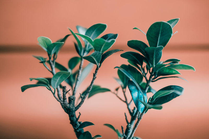 Close-Up Of Plant Against Orange Wall