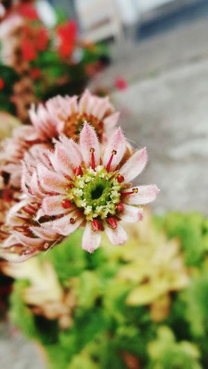 Walking Around Taking Photos Austria Burgenland 💜 Austria EyeEm Nature Lover Flower Nature_collection