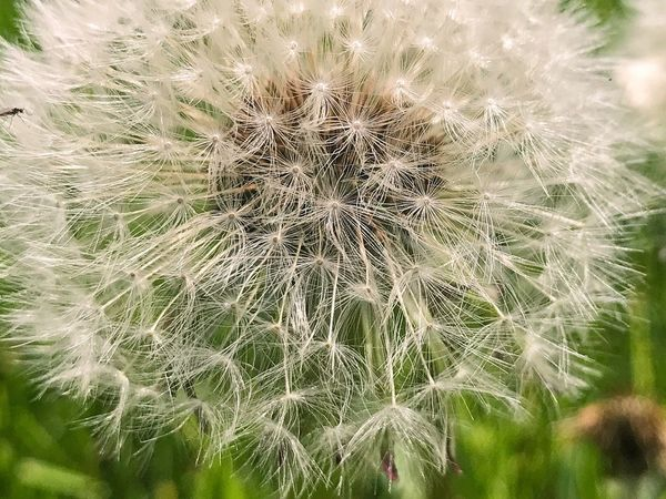 Growth Nature Fragility Dandelion Flower Close-up Plant Beauty In Nature Freshness Focus On Foreground Wildflower Uncultivated Outdoors No People Day Flower Head