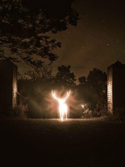 Silhouette people on illuminated field against sky at night