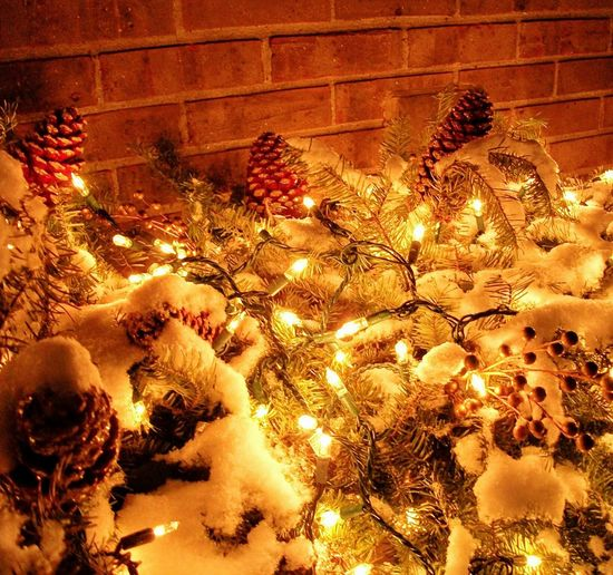 Plant Close-up Outdoors Christmaslights Lights Pine Cones Christmas Decoration Christmas Ornament Christmastime Christmasbushes Tranquil Scene No People Scenics