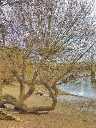 Thames Thamesriver Thames River River Thames River London LONDON❤ Chiswick ChiswickRiverside Low Tide River Beach Thames Beach  Trees