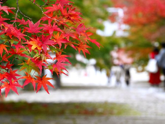 Autumn Collection OpenEdit Japan Tommy@collection EyeEm Nature Lover EyeEm Best Shots Kyoto 真如堂 京都 紅葉 Autumn Autumn Colors Autumn Leaves Colors Of Autumn