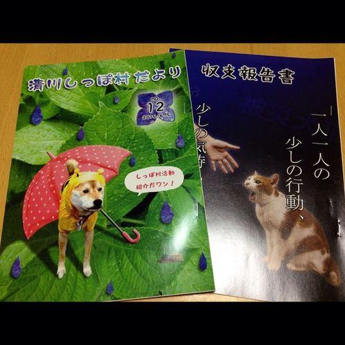 Cat Dog Japan ペット 猫 犬 Volunteer 震災 清川しっぽ村 ワンニャンあしながおじさん あしながおじさん しっぽ村 被災 Earthquakedisaster Shippomura Disasterarea