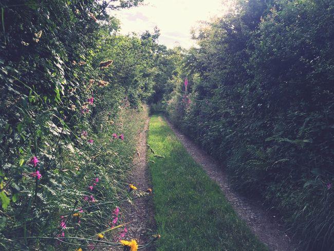 Peaceful walk in Abersoch First Eyeem Photo
