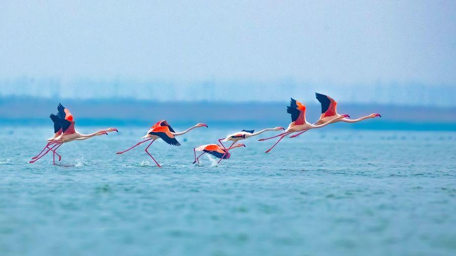 View of birds on sea shore