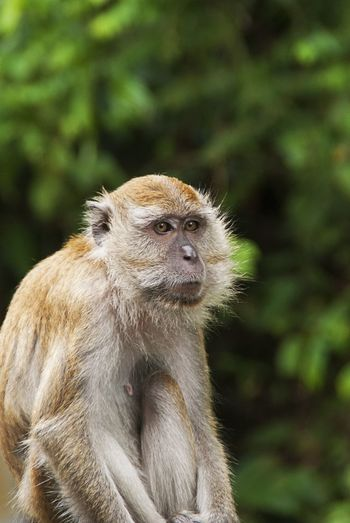 Close-up Of Monkeys Looking Away