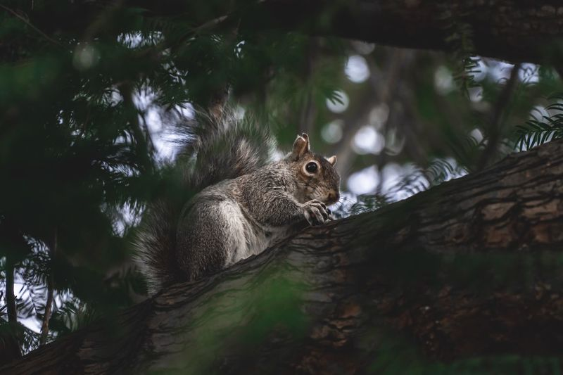 Fluffy Hungry Mammal Nut Park Sweet One Animal Tree Animal Animal Themes Animal Wildlife Animals In The Wild No People Nature Squirrel Tree Trunk Looking Outdoors Growth