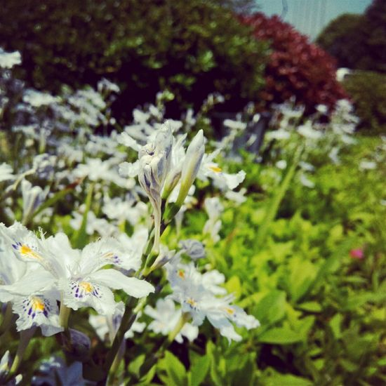 Flowers 在 Chinese Guiyang 中天国际
