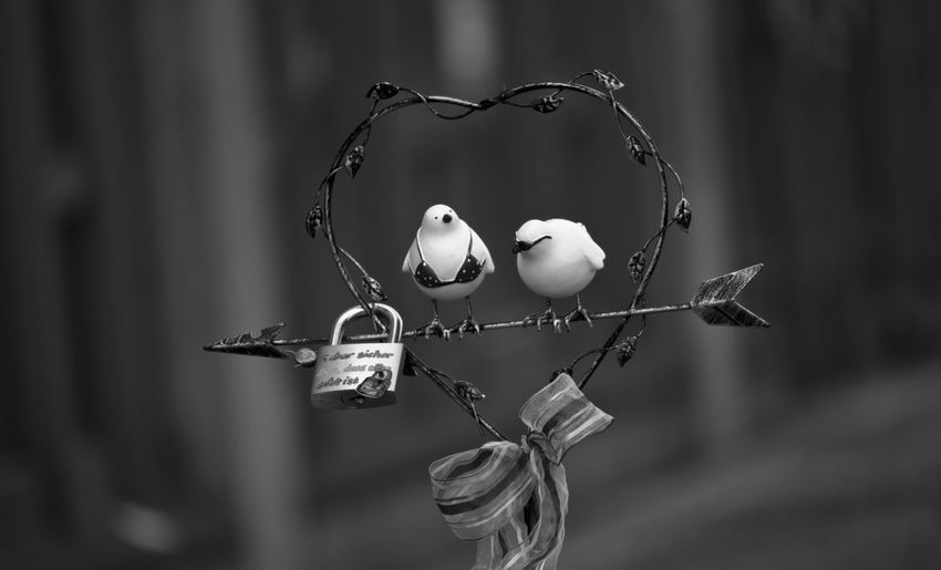 Close-Up Of Pair Of Artificial Birds On Heart Shape