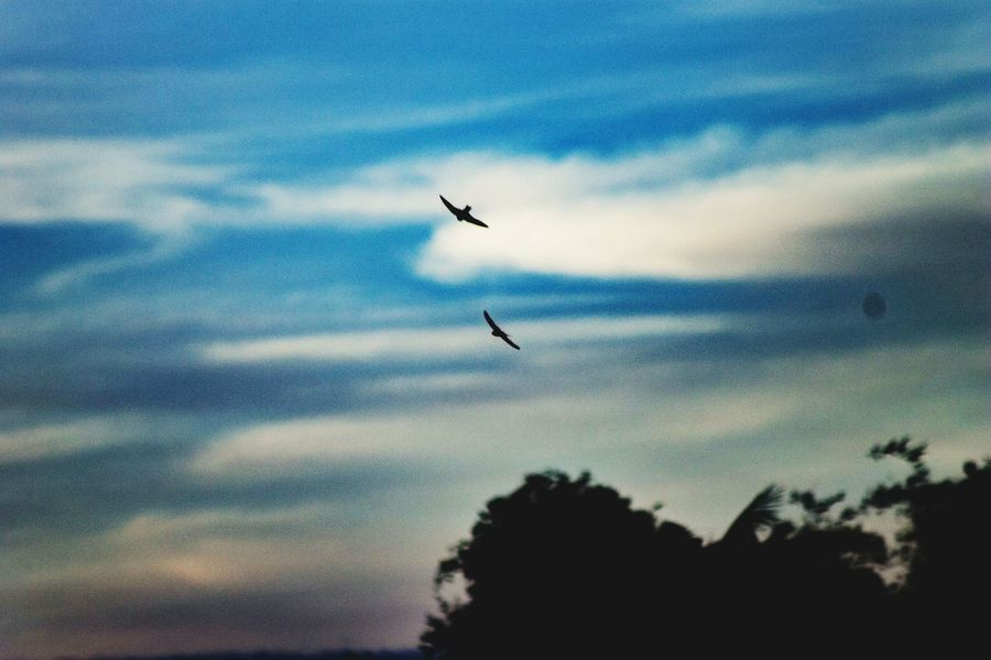 freedom Philippines Dslrphotography Lightroom Cc Scenery Landscapes Wallpaper Snipershot Bluesky Cloudy Flying Bird Animals In The Wild Animal Themes Low Angle View Animal Wildlife Sky Nature Mid-air Outdoors No People Cloud - Sky Day Beauty In Nature Spread Wings
