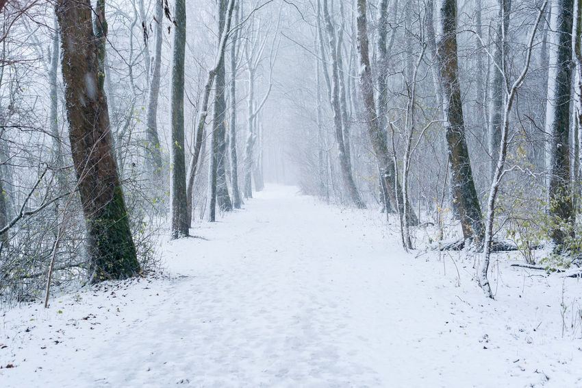 snow in the forest Snow Cold Temperature Tree Winter Direction The Way Forward Plant Land Forest Diminishing Perspective Tranquility Nature Tranquil Scene No People Beauty In Nature Scenics - Nature Day Non-urban Scene Covering Outdoors WoodLand Treelined Snowing