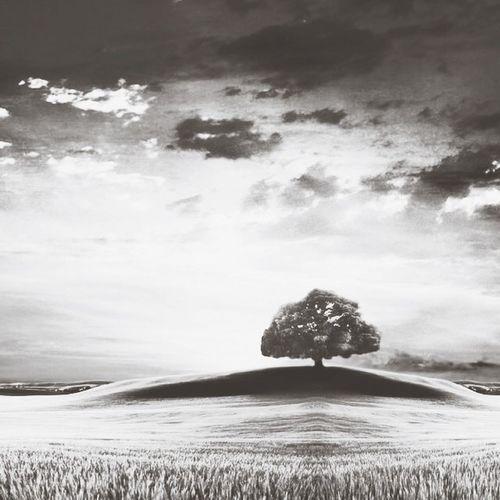 Kırşehir Tree