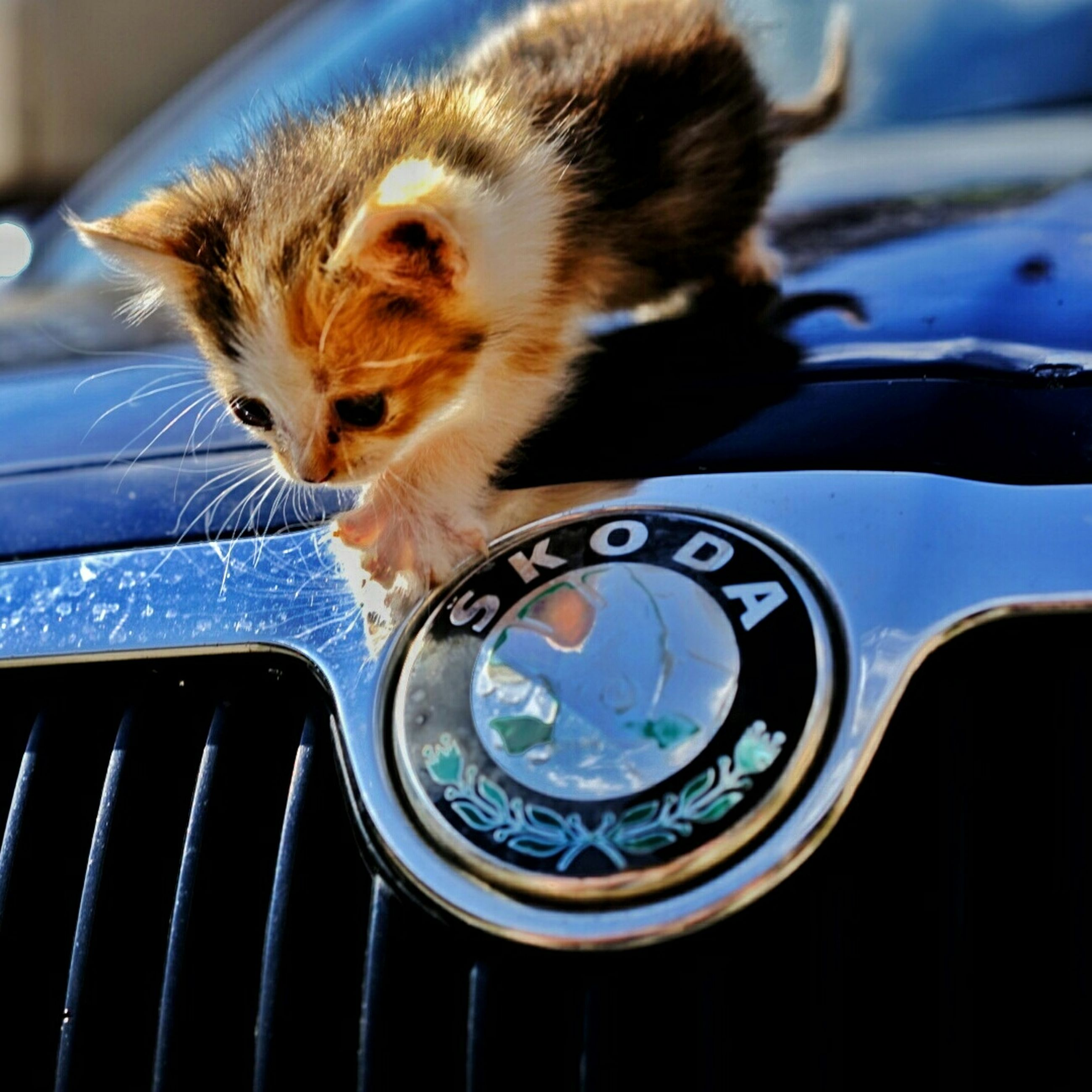 animal themes, one animal, close-up, car, mammal, indoors, transportation, mode of transport, land vehicle, focus on foreground, pets, no people, communication, car interior, day, domestic animals, technology, part of, high angle view, front view