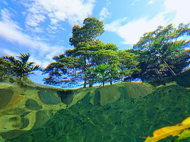 -Fish Vision- Taken by : Bashrah Ramadhan (me) with SONY XPERIA Z3 compact, Location : Puncak Anai, Sumatra Barat, Indonesia Tree Sky Tranquil Scene Tranquility Scenics Growth Beauty In Nature Nature Tourism Travel Destinations Vacations Green Branch Solitude Cloud - Sky Outdoors Blue INDONESIA Underwater Water