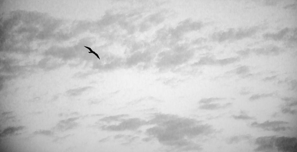 Freedom Bird Flying Sky Nature Outdoors Cloud - Sky No People Clouds Minimalism Minimal Art ArtWork Nikon 35mm 35mmphotography Cloudscape First Eyeem Photo