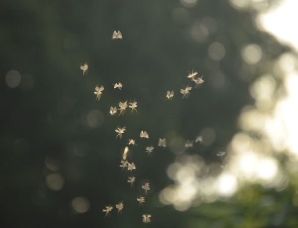 Spring midges \(^o^)/ Nature Beauty In Nature No People Close-up Day Freshness Softfocus Nikon Nikonphotography EyeEm Gallery EyeEmBestPics Eye4photography  EyeEm Outdoors Depth Of Field Springtime Tranquility Focus Freshness Beauty In Nature Peace And Quiet Tranquil Scene