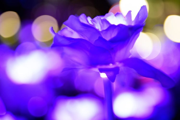 Flower Close-up Purple Petal No People Blue Illuminated Fragility Beauty In Nature Indoors  Nature Night Flower Head Freshness