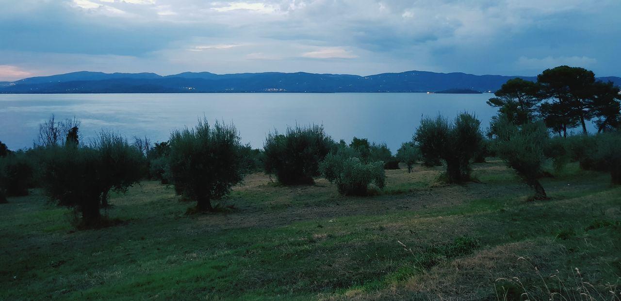 lago Trasimeno Olivi Panorama Panoramic Panoramic Photography Paesaggio Collina Paesaggioitaliano Italy🇮🇹 Lake View Umbria, Italy Castiglione Del Lago Tree Mountain Rural Scene Field Sky Landscape Cloud - Sky
