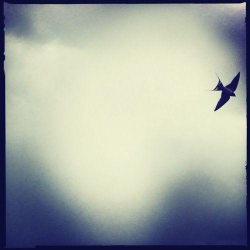 always fly like a bird ...