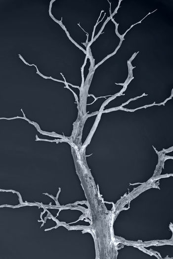 Rethinking Backgrounds Bare Tree Blackandwhite Branch Bw Bw_collection Caducity Dark Dead Dead Plant Ecology Environment Forest Magical Natural Pattern Nature Negative Effect Night No People Outdoors Plants 🌱 Tranquil Scene Tranquility Tree Tree_collection