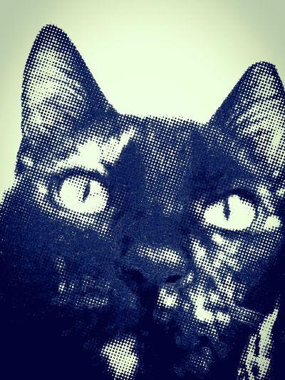 Comic Effect Dots Pointilism Pop Cat Cats Cat Animal Head  Animal Portrait Pets My Cat Cute Pets