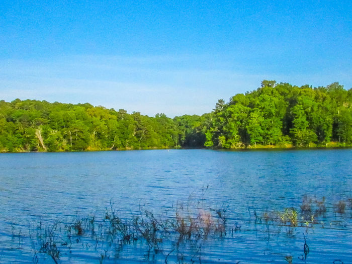 lake Water Reflections Waterfront Lake Copiah Mississippi  Tree Lined Water Beauty In Nature Tree Water Blue Lake Sky Calm Tranquility Lakeside Standing Water Waterfront Shore Countryside Tranquil Scene Idyllic Plant Life Branch Growing Mid Distance Rays
