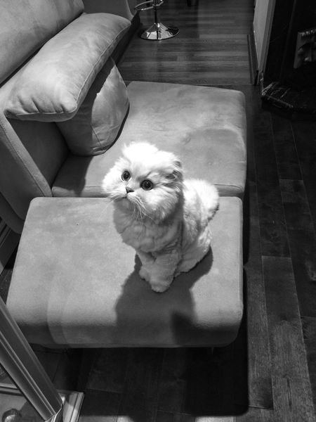 Wonderful weekend to all!🌹❤️ Persian Cat  Lookingup I Love My Cat ❤ Family❤ Bnw_collection Animal Themes Popular Photos Eye4photography  Eyeemphotography Animals In The Wild lol Capture The Moment Cats Of EyeEm No People Domestic Animals Furniture Design Thank You My Friends 😊